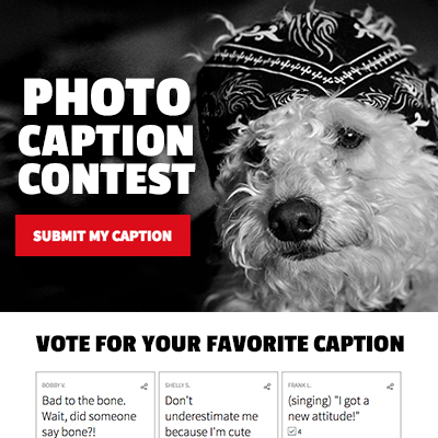 Photo Caption Contest Template