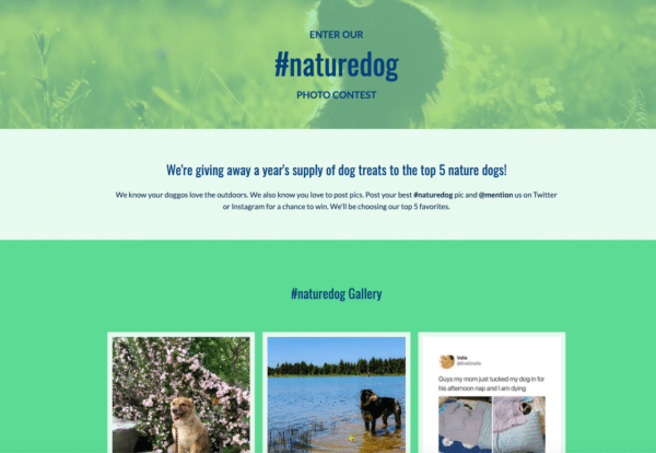 9-February-Contest-Ideas-to-Build-Momentum-For-The-Year-Ahead-naturedog-photo-contest